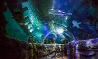 1, 2 o 4 entradas a Sea Life Benalmádena para niños, adultos y seniors desde 8,50 €
