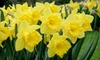 NatureScapes - North Castle: $20 for $40 Worth of Plants and Garden Supplies at NatureScapes in Armonk