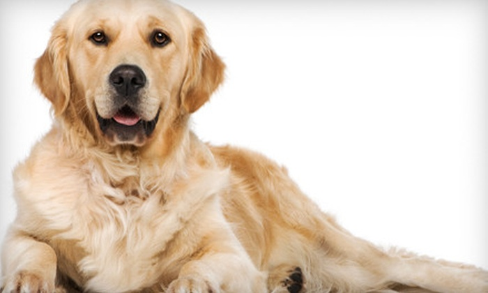 Olive Branch Parke Veterinary Clinic - White River: $12 for Two Nights of Pet Boarding at Olive Branch Parke Veterinary Clinic in Greenwood (Up to $30 Value)