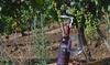Visita e degustazione vino