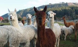 Rotorua Heritage Farm: Tour Admission: 1 Child ($16), 1 Adult ($34), or 2 Adults and 2 Children ($95) at Rotorua Heritage Farm