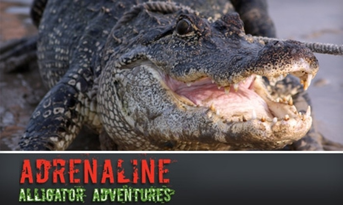 Adrenaline Alligator Adventures - Uptown: $20 for a Ride-Along with Adrenaline Alligator Adventures