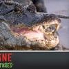 56% Off Adrenaline Alligator Adventures