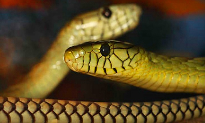 Reptile Discovery Center - DeLand: Reptile Discovery Center Outing for Two or Four in DeLand (Up to 58% Off)