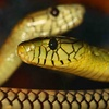 Reptile Discovery Center – Up to 58% Off Group Outings