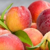 Up to 54% Off Orchard Tours & Produce in Newton