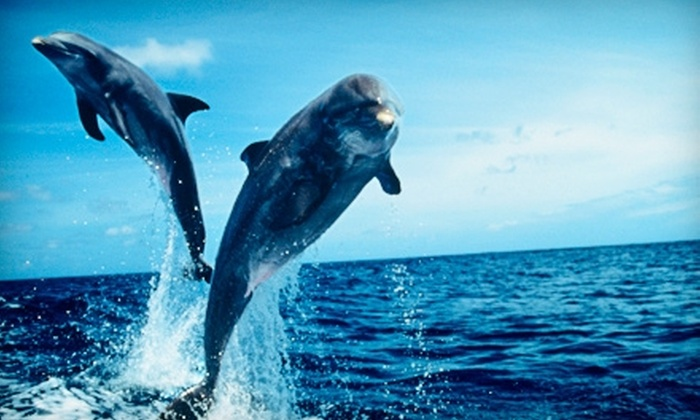 Dolphin Watch Nature Tours - Port Aransas: $9 for a Dolphin-Watching Tour ($20 Value) or $17 for a Bay Fishing Trip ($40 Value) from Dolphin Watch Nature Tours