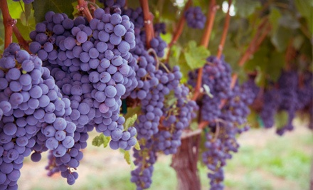 Winery Tour and Bottling Experience for 2 People (a $260 value) - Bacchus Winemaking Club in Toms River
