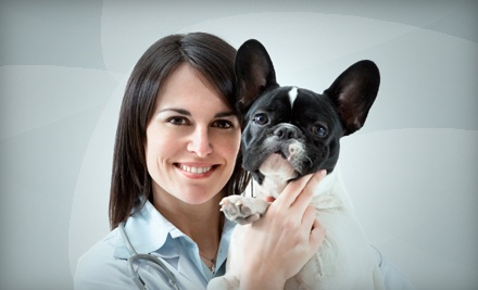 5 Dog-Daycare Visits (a $105 value) - Lucky Bones Dog Day Care in Pickerington