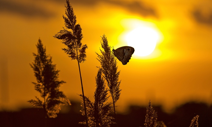 """""""Butterflies at Sunset"""" Event - Moonlight Studios: Sunset Butterfly Release and Gala on March 25"""