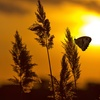 Sunset Butterfly Release and Gala on March 25