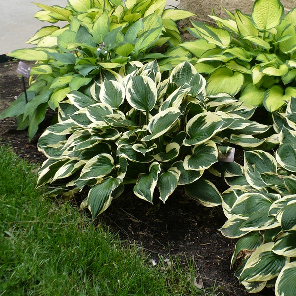 Mixed Bare Root Plants 9 Pack Groupon Goods