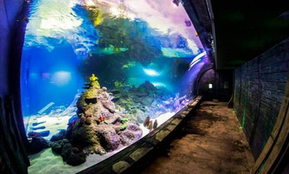 image for Skegness Aquarium Ticket for One Child, One Adult or Family of Four (Up to 27% Off)