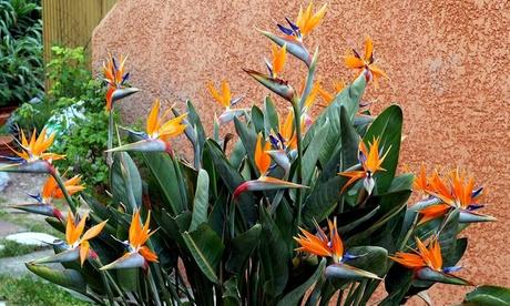 OH2 3er- oder 6er-Set Paradiesvogelblumen mit dekorativen Blüten in Haus