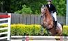 Lezioni di equitazione, 60 minuti