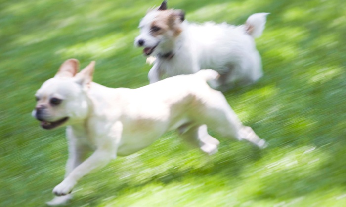 Roxy's Doggy Day Care & Boarding - Downtown Los Angeles: Five Days or One Month of Doggy Daycare, or Three Nights of Boarding at Roxy's Doggy Day Care & Boarding (Up to 59% Off)
