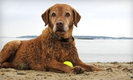$20 Groupon to Fetch - Fetch in Portland