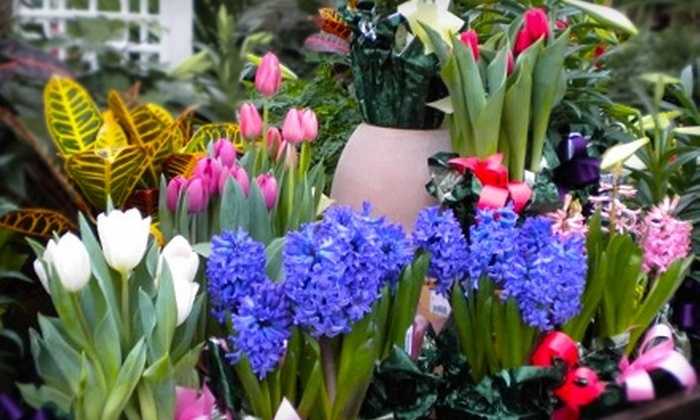 Village Green Home and Garden - Multiple Locations: $25 for $50 Worth of Flowers at Village Green Home and Garden