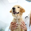 Up to 60% Off Vet Services at Country Oaks Animal Hospital