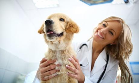 Esterilización de gato o perro con visita pre y postquirurgica desde 34 € en Clínica veterinaria Vetmar