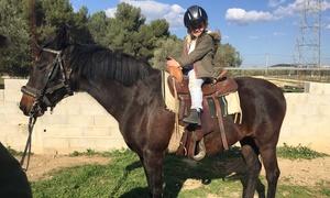 Balade à poney avec préparation et brossage Rognac