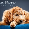 """Peter Rufo Photography - South Side: $40 for a 30-Minute Pet Photography Session Plus an 8""""x10"""" and a 5""""x7"""" Print from Peter Rufo Photography ($150 Value)"""