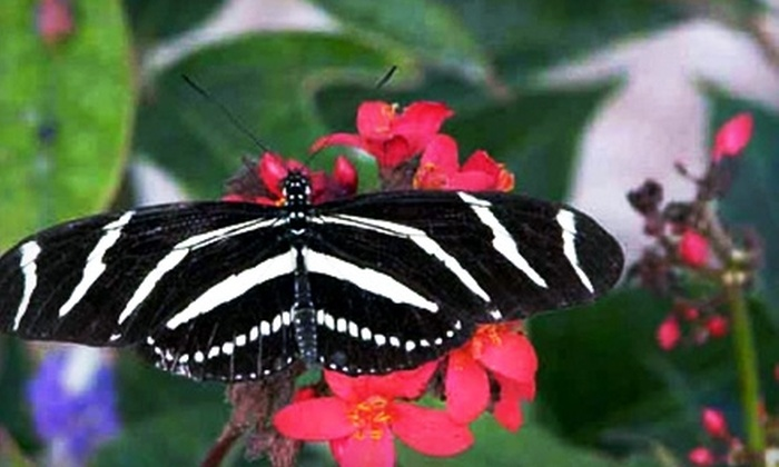 Homosassa Butterfly - Homosassa Springs: $9 for Two Admissions to Homosassa Butterfly (Up to $19 Value)