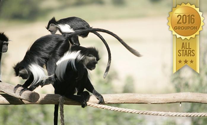 פארק הקופים- מרכז הצלה לקופים, מהגדולים בעולם: פעילויות לכל המשפחה, כולל סיורי ערב קסומים רק 34 ₪ לכרטיס