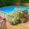 53% Off Pressure-Washing Services