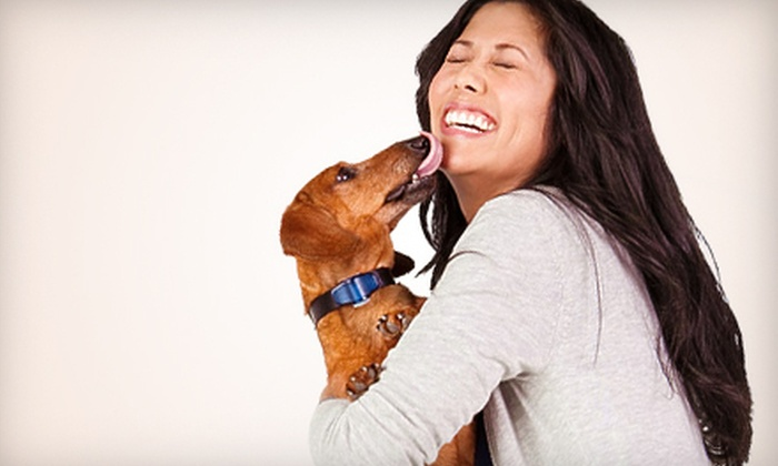 INVISIBLE FENCE BRAND - Chicago: $275 for an Indoor or Outdoor Pet-Fence Package from INVISIBLE FENCE BRAND ($599.95 Value)