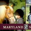 58% Off Horseback-Riding Lessons