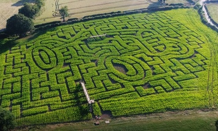 Maize Maze at Cawthorne