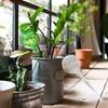 Globe d'arrosage pour plantes