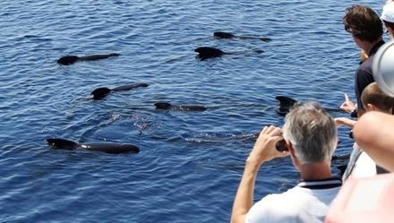 Escursione avvistamento cetacei