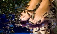 Sesión de ictioterapia con masaje de pies, peeling y opción a masaje corporal desde 14,95 € en Fish Spa Canarias