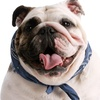 Up to 53% Off Pet Cremation Services