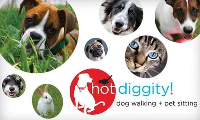 Hot Diggity! - Portland: $15 for $30 Worth of Pet Services at Hot Diggity!