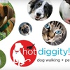 Hot Diggity!: $15 for $30 Worth of Pet Services at Hot Diggity!