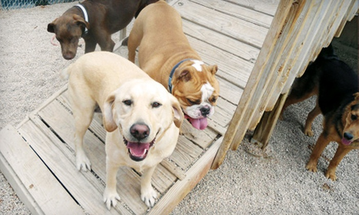 Camp Bow Wow - Burnsville: One or Five Days of Doggy Day Camp or One or Seven Overnight Stays at Camp Bow Wow in Burnsville
