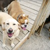 Up to 56% Off Doggy Day Camp in Burnsville
