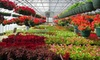 Proper Plants Inc. - Kenne/Military Road: $10 for $20 Worth of Plants and Flowers at Proper Plants Inc.