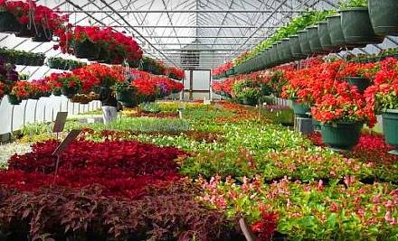 $20 Groupon to Proper Plants Inc. - Proper Plants Inc. in Lexington