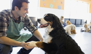 The Bark Lounge: Doggy Daycare or Kennel-Free Boarding at The Bark Lounge (Up to 55% Off). Four Options Available.