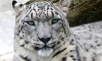 Entrée enfant de 3 à 9 ans ou entrée adulte ou enfant de plus de 10 ans dès 10 € au Parc Animalier d'Auvergne