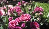 7 Day Nursery - North State: $15 for $30 Worth of Plants and Flowers at 7 Day Nursery