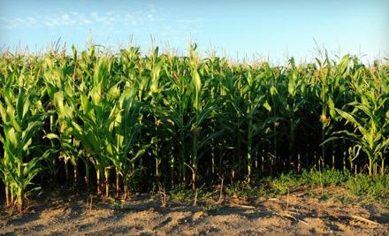 1 Adult and 1 Child Admission to the Corn Maze and Laser Tag (a $28 value) - Maldonado Maze in La Union