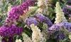 Set de arbustos de mariposa