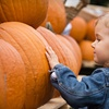 Up to 54% Off Fall-Activity Outings at Crooked Pines Farm
