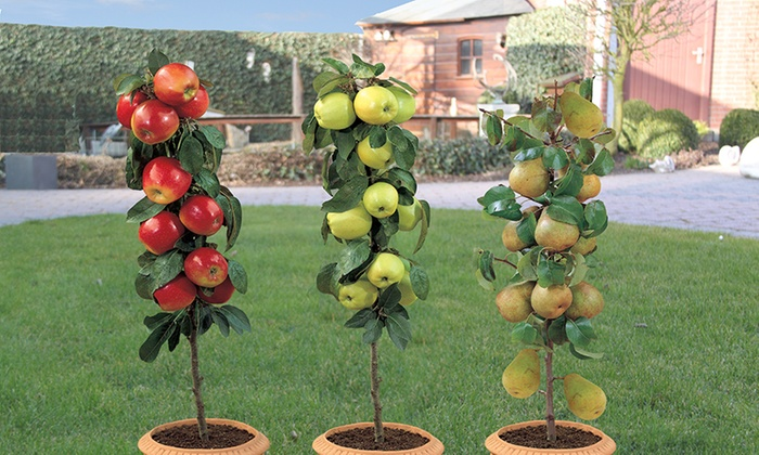 mini fruitboompjes