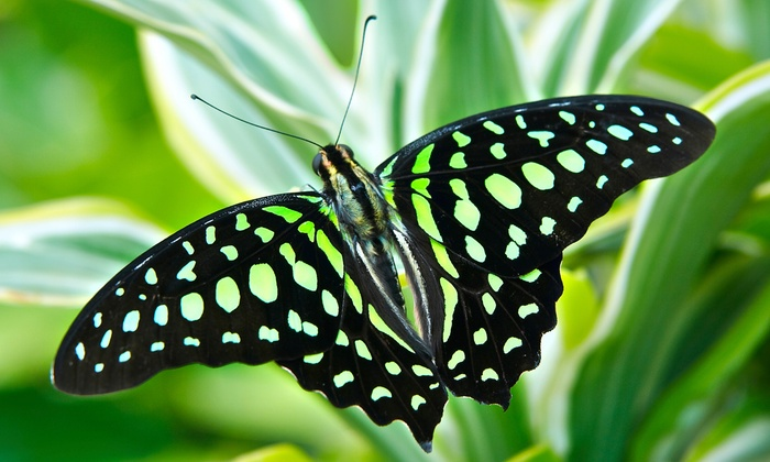 The Butterfly Place - Westford: Admission for Two at The Butterfly Place (36% Off)